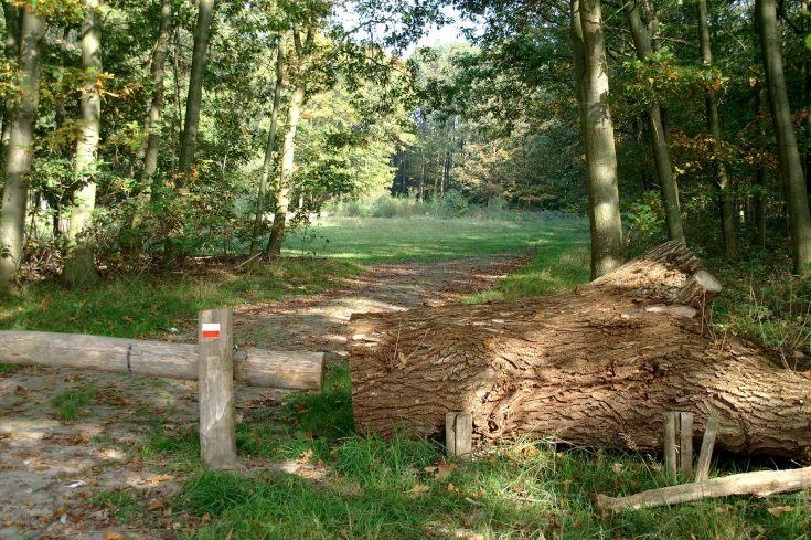 Bosgebied Odiliapeel
